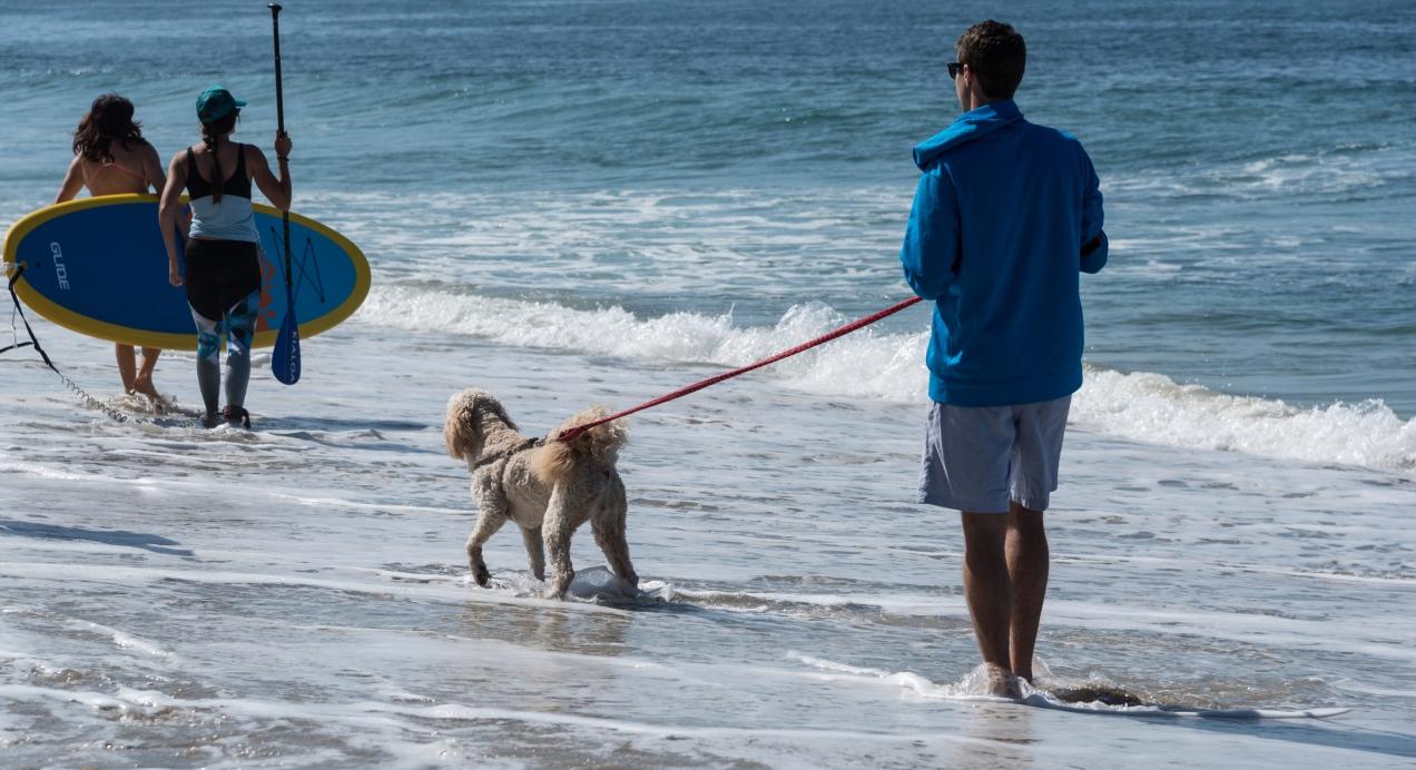 dog on the beach-1