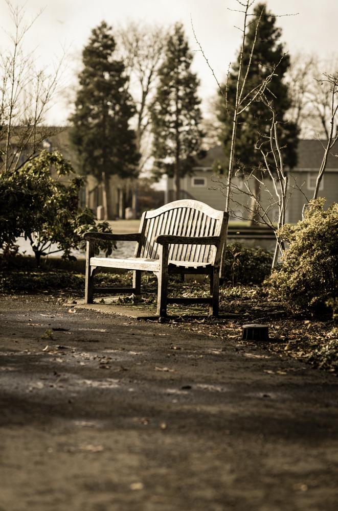 lone bench-1